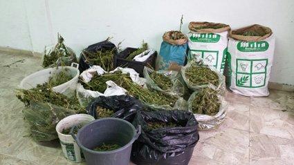 Una parte della marijuana sequestrata