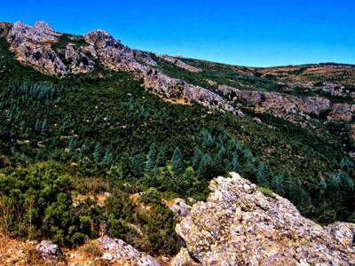 Uno scorcio della Foresta di Montes