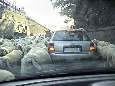 Un gregge di pecore in contesto urbano (foto di repertorio)