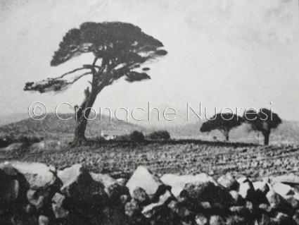 """Il pino di Grazia Deledda e i """"gialli deleddiani"""""""
