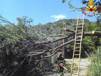 I Vigili del fuoco tagliano l'albero abbattuto dal vento