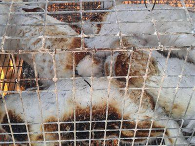Alcuni animali morti nel rogo a Scano (foto M.Dettori)