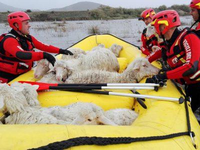 I Vigili del fuoco salvano gli animali dagli allagamenti