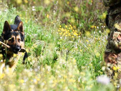 Il cane dell'Unita cinofile Carabinieri