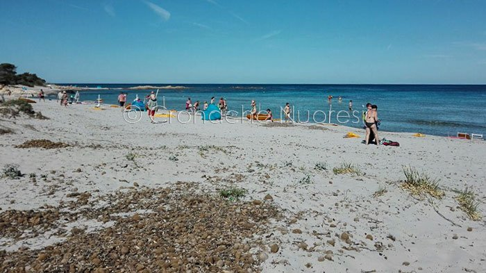 La spiaggia di Cala Ginepro dopo il passaggio della tromba d'aria