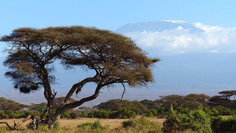 Un'immagine del Kenya