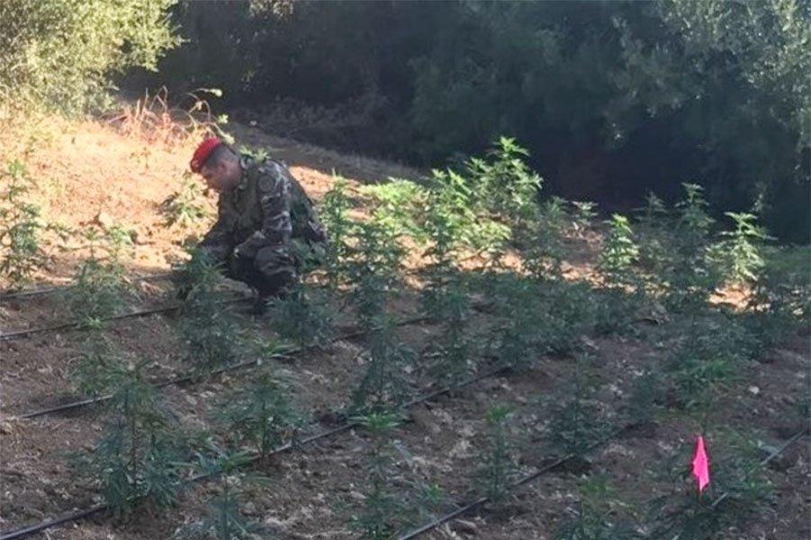 La maxi piantagione posta sotto sequestro