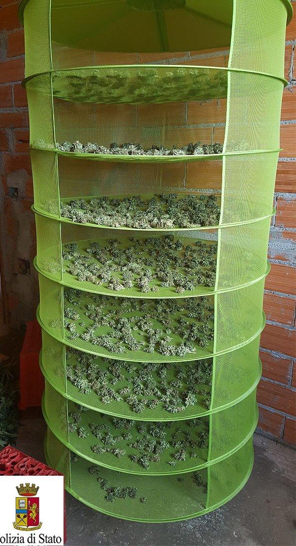 Marijuana nell'essiccatore
