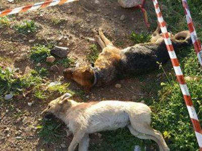 Due dei cani avvelenati