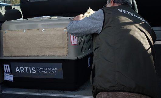 grifoni amsterdam