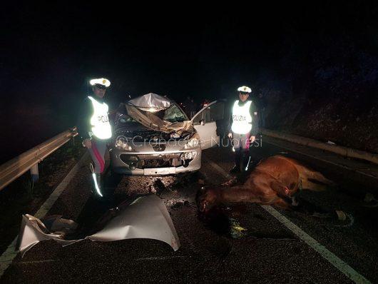 La Peugeot dopo lo schianto contro i due cavalli