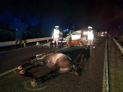 I due cavalli morti dopo lo schianto contro la Peugeot