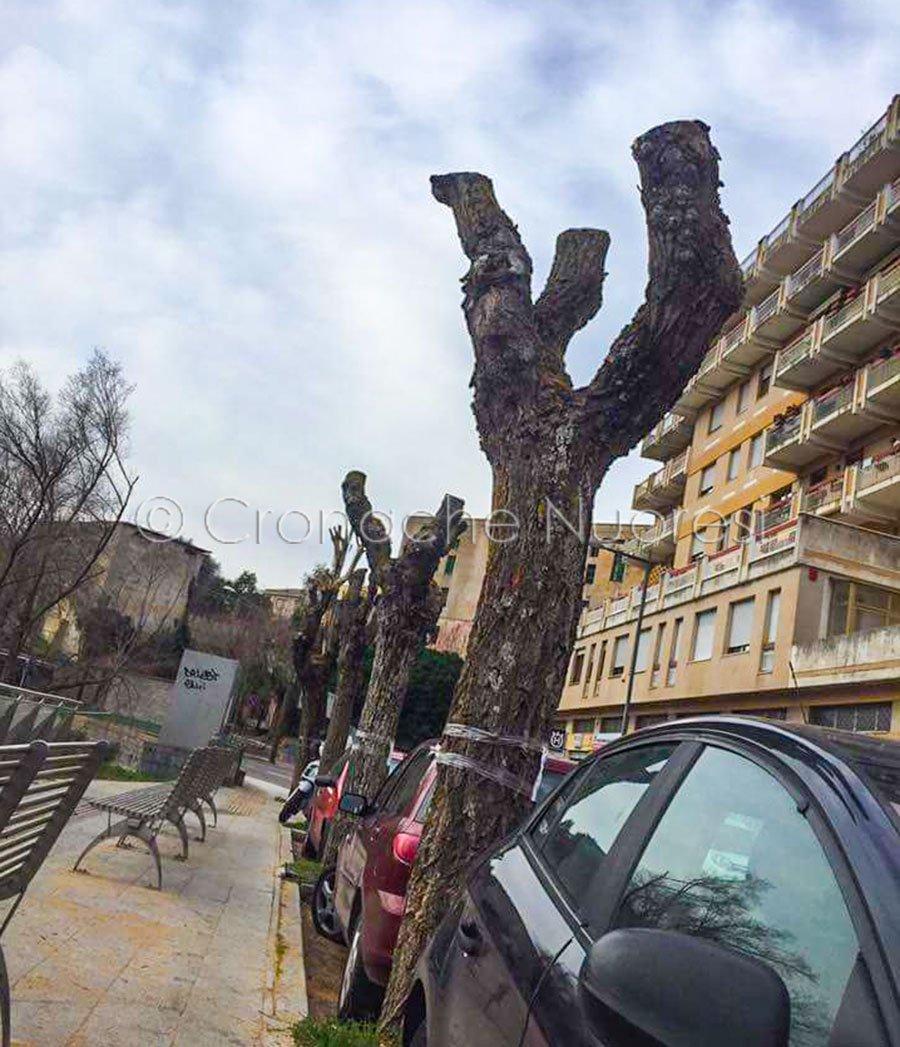 Nuoro, alcuni alberi capitozzati in viale Ciusa (© Cronache Nuoresi)