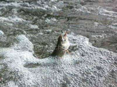 Pesca al fiume (foto I.Ibba)