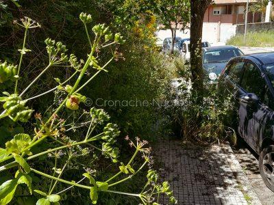 Nuoro, marciapiedi invasi dalle erbacce (foto Cronache Nuoresi)