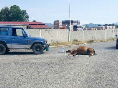 Il cavallo deceduto dopo l'impatto