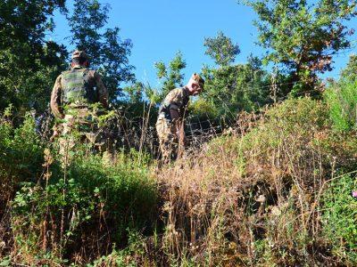 La piantagione scoperta a Dorgali
