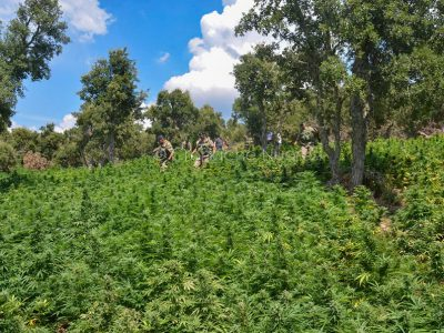 Bitti, la maxi piantagione dei marijuana scoperta