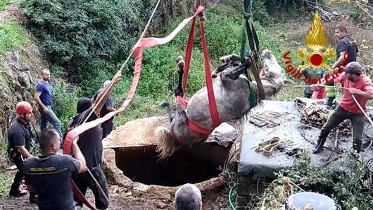 Il recupero del cavallo precipitato nel pozzo