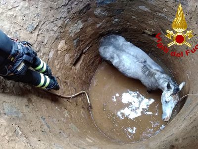 Il cavallo precipitato nel pozzo
