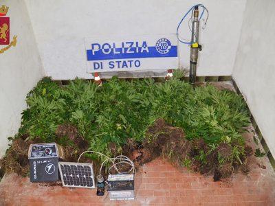 La marijuana sequestrata a Sarule