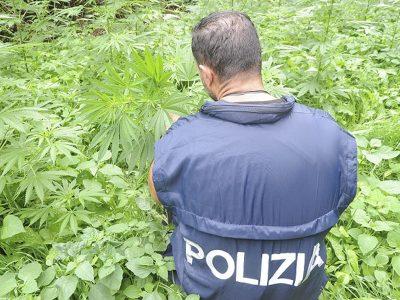 La Polizia durante il sopralluogo nella piantagione