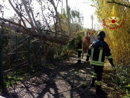 I VVFF rimuovono l'albero spezzato