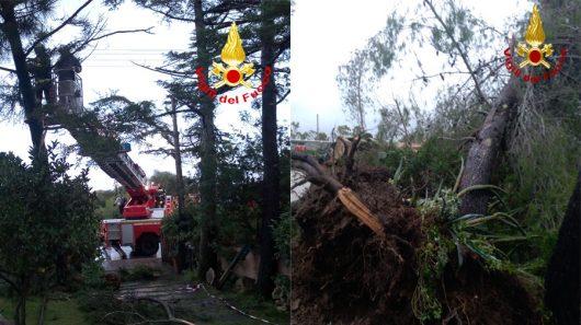 Due alberi danneggiati dal maltempo