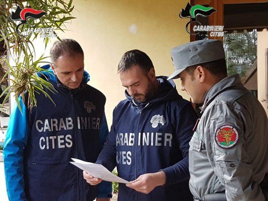 Carabinieri vagliano i documenti dell'ocelot