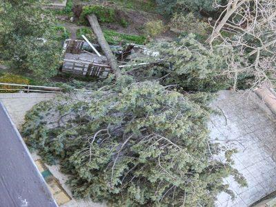 Nuoro. Un albero sradicato dal vento in via Marche