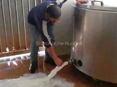I pastori sardi buttano il latte per protesta contro il prezzo del latte
