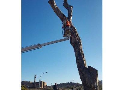 L'abbattimento del pino di Grazia Deledda