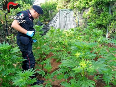 I Carabinieri sul luogo della coltivazione di marijuana