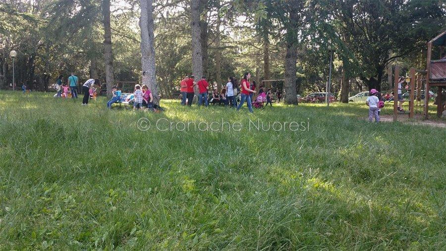 Il parco del monte Ortobene ricoperto di erbacce