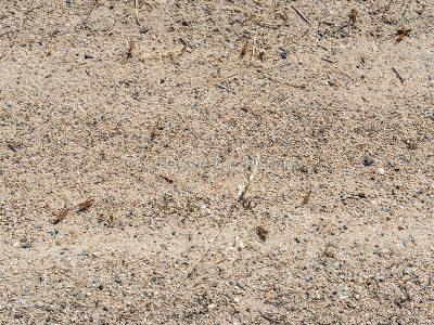 L'invasione di locuste nelle campagne del Nuorese (© foto S.Novellu)