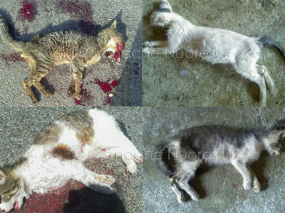 Alcuni dei gatti uccisi a Siniscola