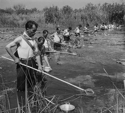 Suschitzky. Alla ricerca delle larve delle zanzare, Cixerri, Siliqua, 1948