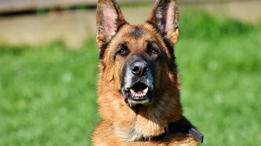 Cani uccisi a Budoni: i potenziali responsabili sono solo indagati