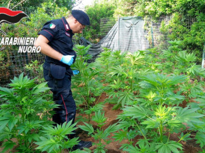 I Carabinieri nella piantagione di marijuana