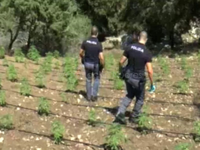 Oliena. La Polizia nella piantagione di marijuana