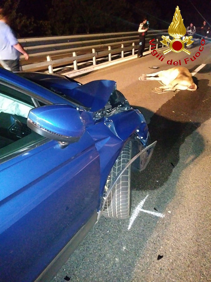 L'auto e l'animale dopo l'incidente