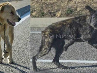 I due cani legati abbandonati sulla Statale 389