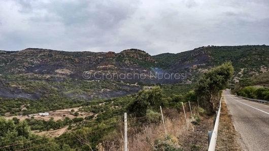 Le campagne di Bosa dopo l'incendio (foto Piergavino Vacca).