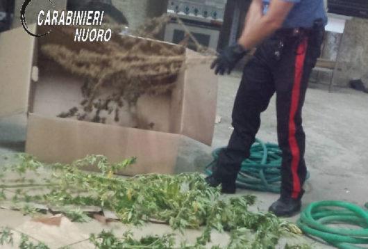 Le piante rinvenute a Tortolì