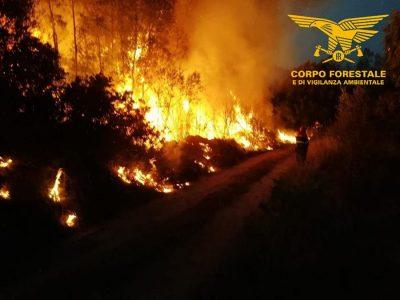 Un intervento del Corpo Forestale durante un incendio
