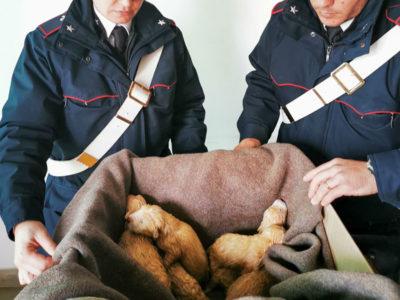 I Carabinieri con i cuccioli salvati