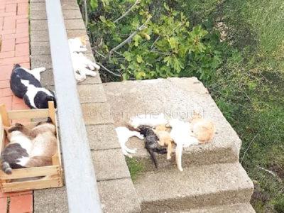 I gatti avvelenati a Orosei