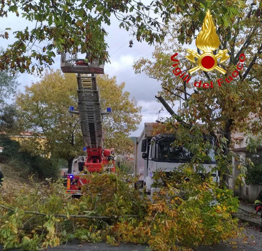 L'albero caduto in via Lazio