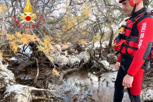 Vigili del Fuoco durante il recupero delle carcasse.