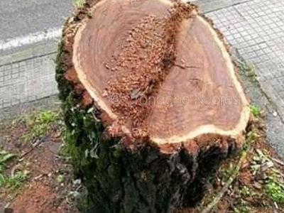La potatura di un albero
